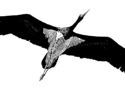 Un manifeste sonore pour les oiseaux