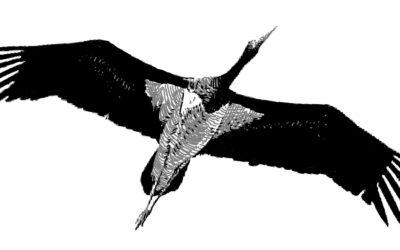 Une création sonore au nom des oiseaux